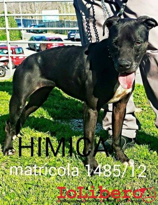 HIMICA BORGHESE