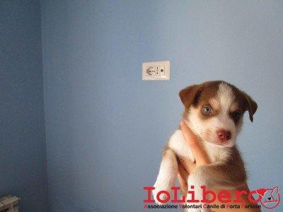 cucciolo neonato vale 2