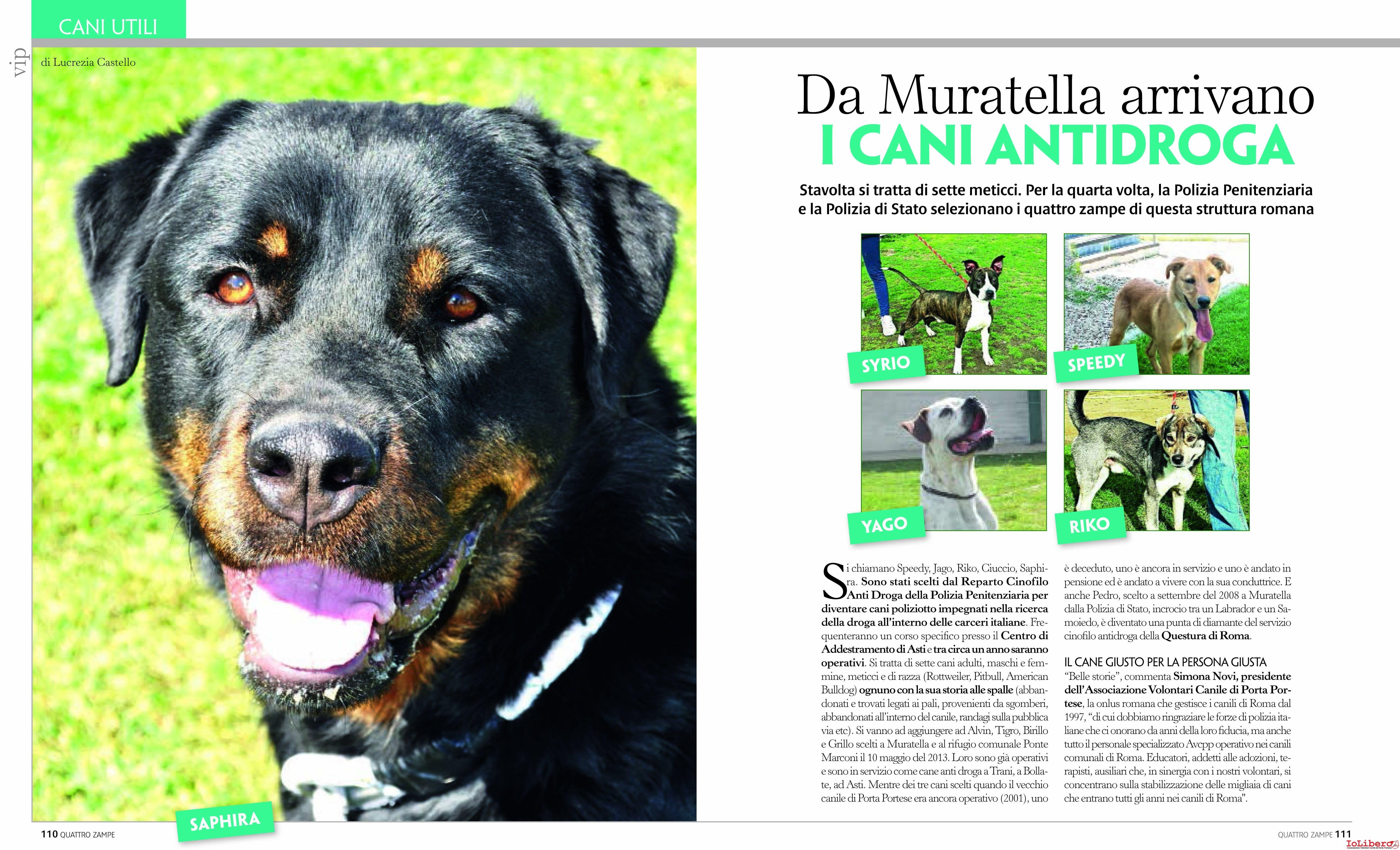 Da muratella alla polizia 7 cani meticci all 39 antidroga - Porta portese numero ...