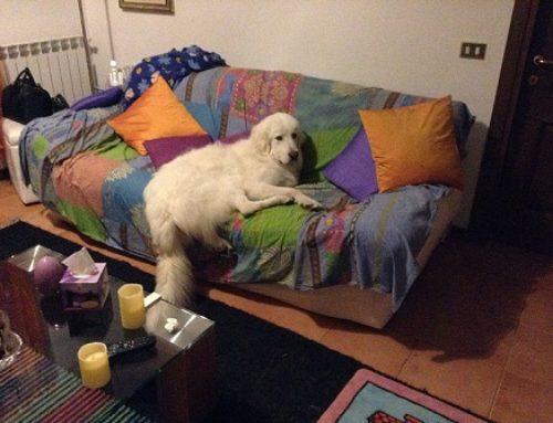 FUORI DALLE GABBIE!! ADOTTATO – Joy…dalla gabbia al divano!!