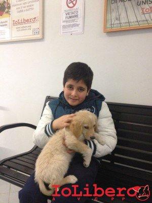 cucciolo adottato ambra 1