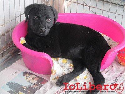 matr. 192.16 meticcio femmina nero cucciolo entrato 3.2.16 arco di travertino