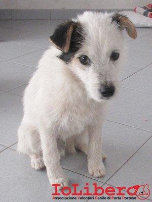 matr. 294.16 meticcio cucciolo bianco nero maschio entrato 18.2.16 via fosso della solfatara op (7)