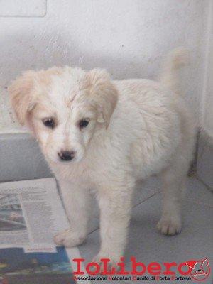 matr. 299.16 meticcio cucciolo bianco maschio entrato 18.2.16 via fosso della solfatara op (1)