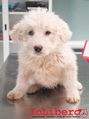 matr. 422.16 meticcio bianco cucciolo femmina entrata il 16.3.16 da V. Porta Medaglia 122 op