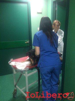 """Sansone entra in ricovero insieme alle sue gentili infermiere """"custodi"""""""