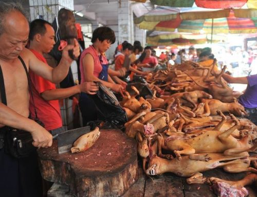 Ricordiamo il presidio organizzato dagli Animalisti Italiani Onlus contro la strage del 21 giugno a Yulin!