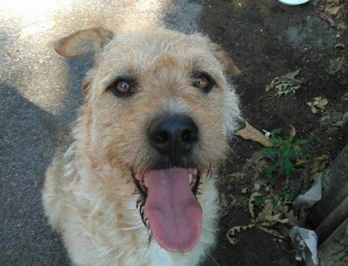 02/09/2016 Avvistamento! Urgente! zona Castelli Romani-Nemi(Rm) cane maschio. Taglia media. Collare scalibor.