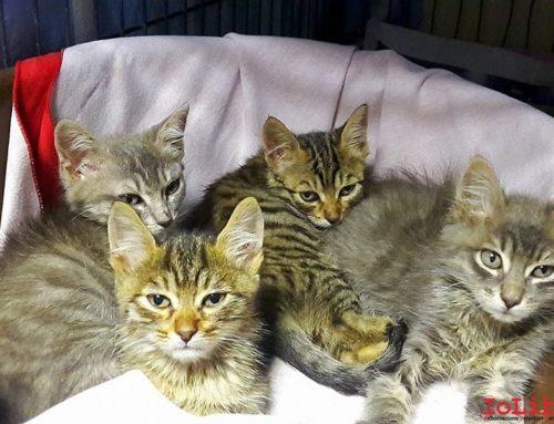 I Tremolini, 4 fratellini bellissimi