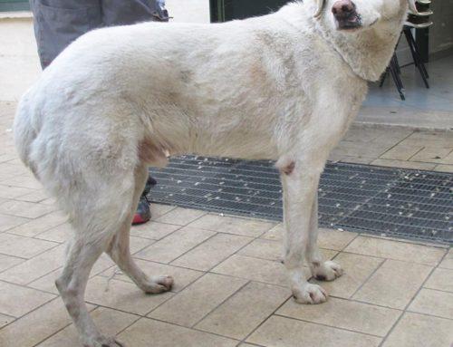 Una cucciolona timida e sfortunata, guardate i suoi occhi