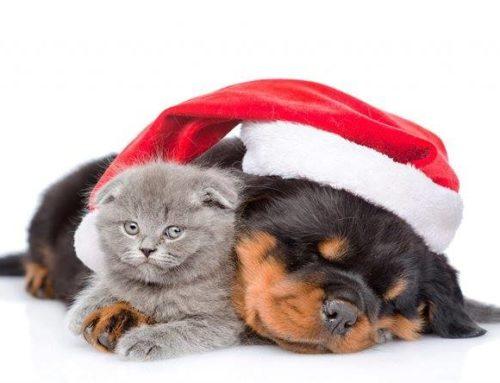 GRAZIE! Quest'anno sotto l'albero di Natale anche cibo per cani e gatti