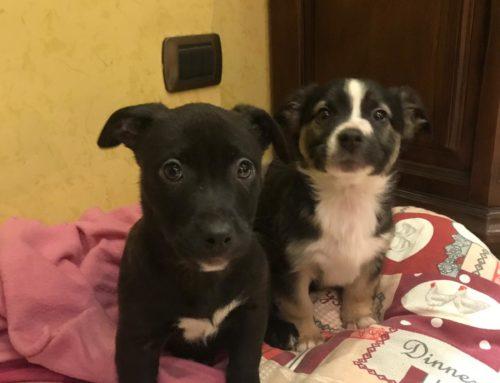 Nocino Matr. 2019/0355 e Clotilde Matr 2019/0360 due cuccioli di due mesi