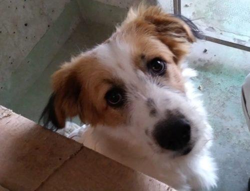 Fiocco è un cucciolo di sei mesi Matr. 2019/0365