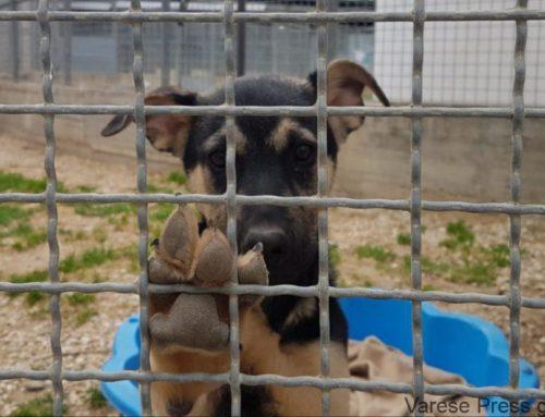 VERGOGNOSA MELINA IN CONSIGLIO CAPITOLINO A DISCAPITO DEI DIRITTI DEGLI ANIMALI