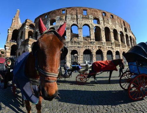 APPELLO alla Sindaca RAGGI dalle associazioni ANIMALISTI ITALIANI, AVCPP, ENPA, LAV, OIPA.