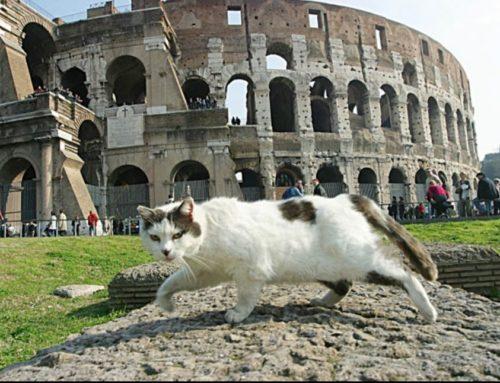 CHI TUTELA GLI ANIMALI A ROMA?