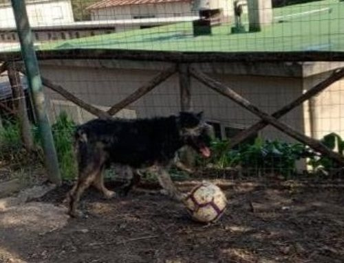 ERCOLE, un piccolo calciatore, matricola 2017/2088