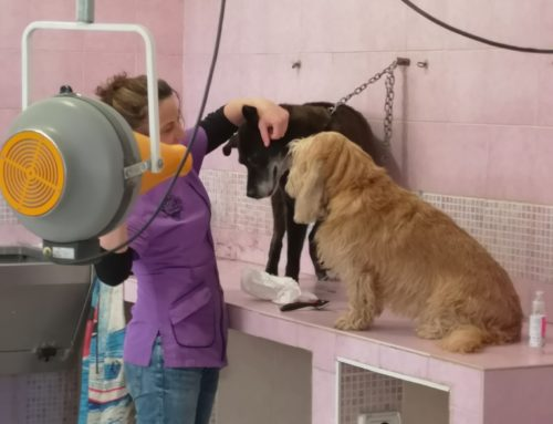 Sbloccare le adozioni di cani e gatti e garantire l'apertura dei negozi di toelettatura di animali domestici