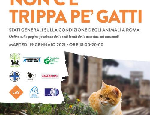 COMUNICATO STAMPA NON C'E'TRIPPA PE' GATTI Stati Generali sulla Condizione degli Animali a Roma