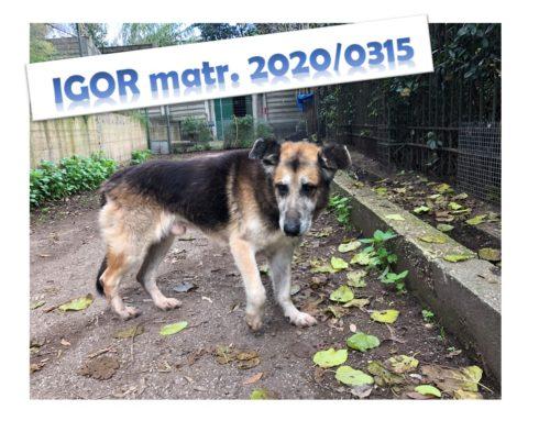 IGOR matricola 2020/0315