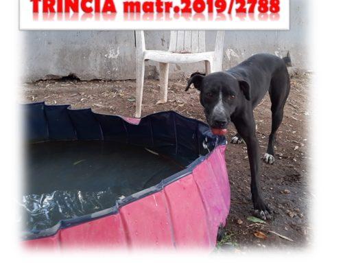 ADOTTATA TRINCIA matricola 2019/2788