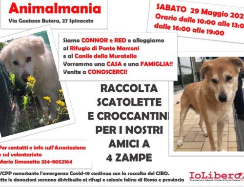 ECCO TUTTE LE FOTO! CIBO GIA CONSEGNATO!!!SABATO 29 MAGGIO 2021 TUTTI DA ANIMALMANIA PER UNA RACCOLTA DI CIBO!