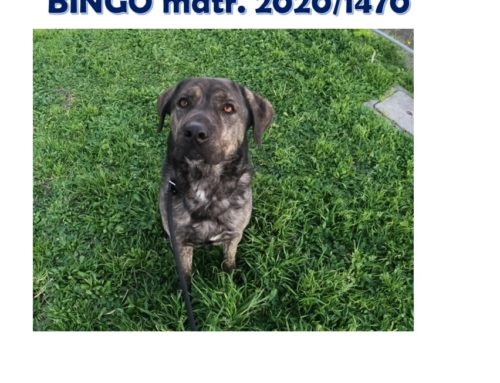 BINGO matricola 2020/1470